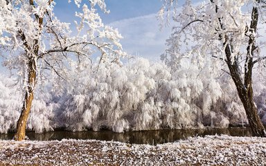 冬令进补 善用传统补品