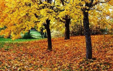 秋天食补的基本原则