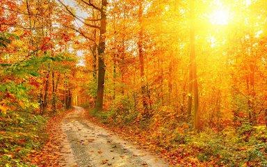 秋季养生进补要适度
